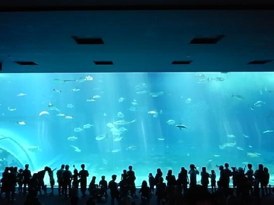 Super Hotel Okinawa Nago: 翌日に行った美ら海水族館です