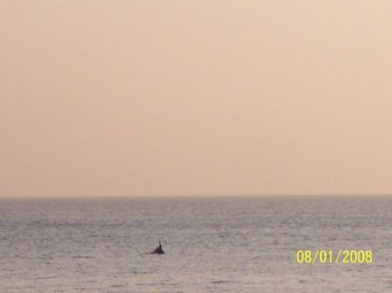 เวอร์จิเนียบีช, เวอร์จิเนีย: there were sooo many dolphins!  and a couple got super close to the shore!