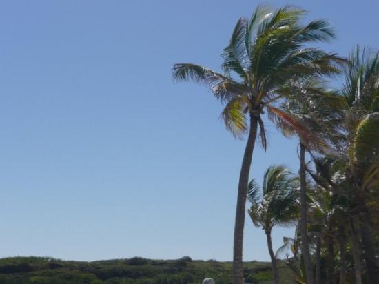 กวาเดอลูป: Et en plus on a eu le droit au meilleur temps des vacances ce jour là, pas un seul nuage!!