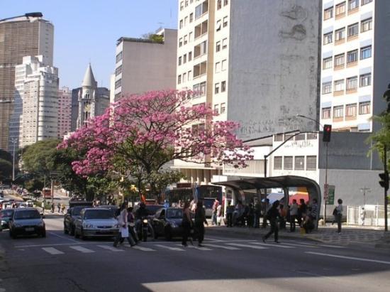 เซาเปาลู: Sâo Paulo- Avenida Paulista