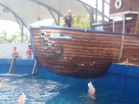 ไมอามี่ีบีช, ฟลอริด้า: Seaworld Acquarium Miami