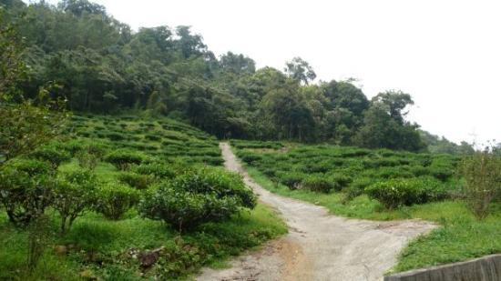 Sun Moon Lake: : Tea plantations!