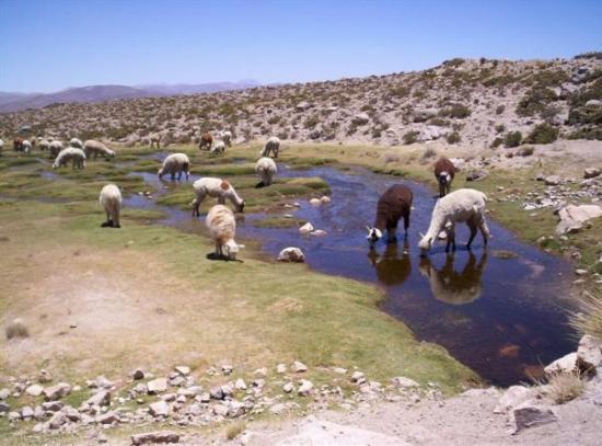 Colca Canyon (หุบเขากอลกา), เปรู: Algures no deserto entre Arequipa e Colca canyon