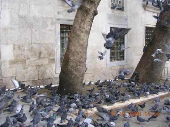 มัสยิดสุลต่าน เอยุพ (สุเหร่า สุลต่าน เอยุพ): ISTANBUL