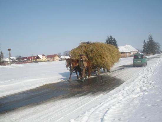 Brasov, โรมาเนีย: carpinis