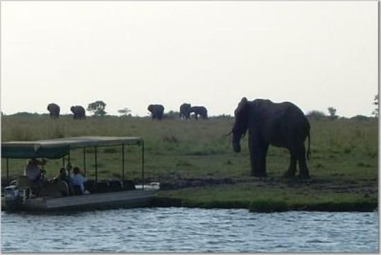 Chobe National Park, บอตสวานา: Chobe River Safari, Botswana