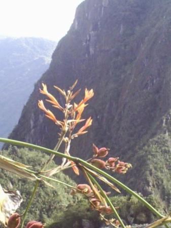 มาชูปิกชู, เปรู: Machu Pichu!