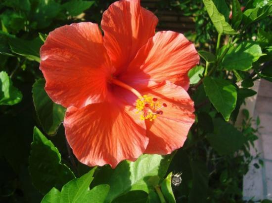 Grand Bahama Island: flower!!!