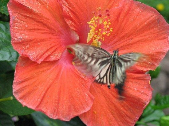 The Original Mackinac Island Butterfly House & Insect World ภาพถ่าย