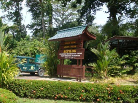 Sandakan, Malaysia: Sepilok Orangutan Rehabilitation Centre