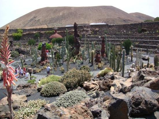 Haria, สเปน: Jardín de Cactus