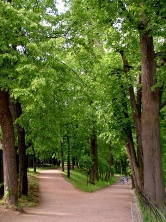 พระราชวังและสวนปีเตอร์ฮอฟ: The forking path with the high road and the low road... I went left.