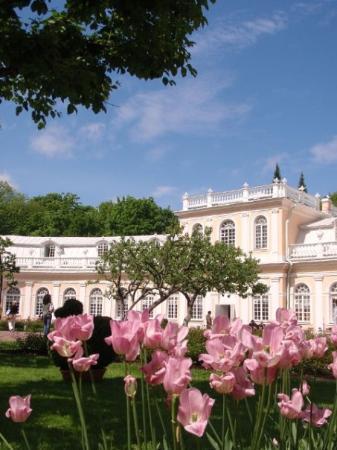 เซนต์ปีเตอร์สเบิร์ก, รัสเซีย: Sorry... tulips...