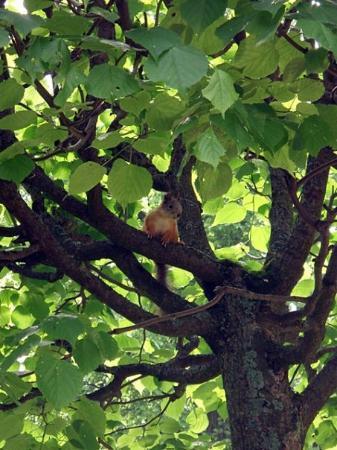 เซนต์ปีเตอร์สเบิร์ก, รัสเซีย: Squirrel.