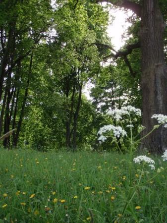 เซนต์ปีเตอร์สเบิร์ก, รัสเซีย: Wildflowers (no tulips).