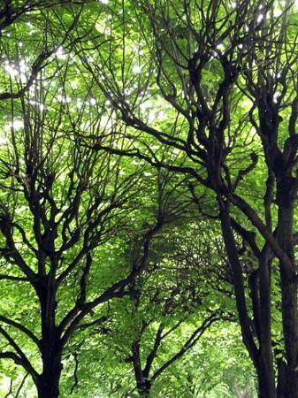 เซนต์ปีเตอร์สเบิร์ก, รัสเซีย: Trees with branches... everything felt green. The air was green. I was green.