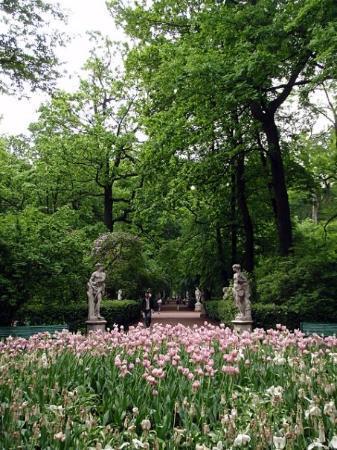 เซนต์ปีเตอร์สเบิร์ก, รัสเซีย: Prepare thyself for a few tulip shots... my apologies for going crazy over tulips.