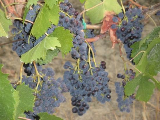 Montelupo Fiorentino, อิตาลี: but the wine was good