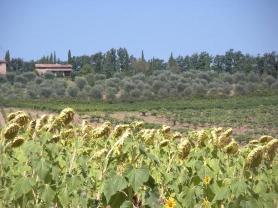 Montelupo Fiorentino, อิตาลี: On the way to San Gimignano