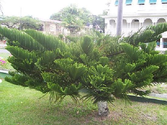 Herdmanston Lodge -- Guyana Hotels: Herdmanston Lodge Garden