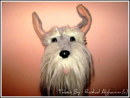 คูเวตซิตี, คูเวต: Fluffy Head <3  Taken My Me