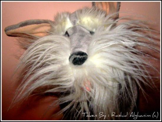 คูเวตซิตี, คูเวต: Fluffy Head <3 Taken By Me