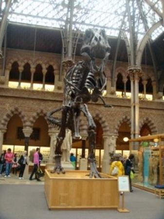อ๊อกซฟอร์ด, UK: Natural History Museum, Oxford