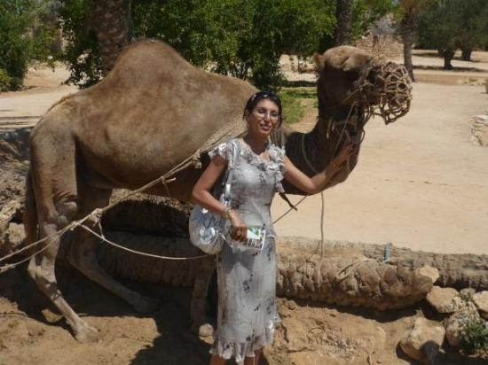 เกาะเจอร์บา, ตูนิเซีย: Djerba explore, the camel