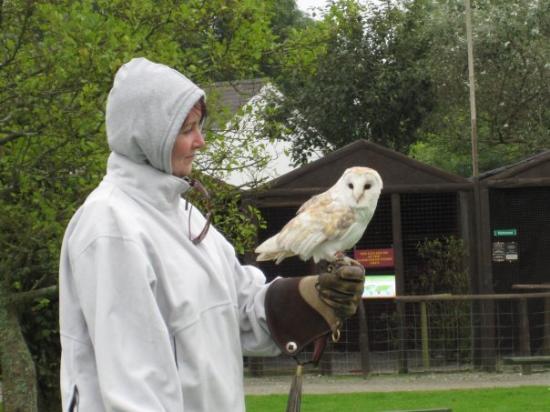 Screech Owl Sanctuary: Me (looking like a scally wearing Ian's coat) flying Snowy the European Barn Owl at Screech Owl