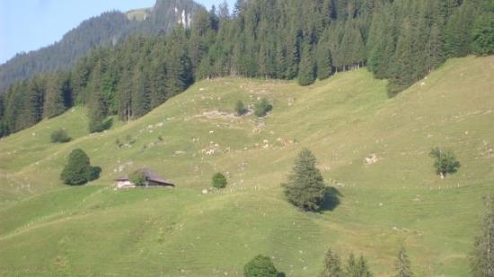 Schwarzsee ภาพถ่าย