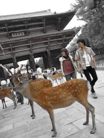วัดโทไดจิ: Todaiji Temple