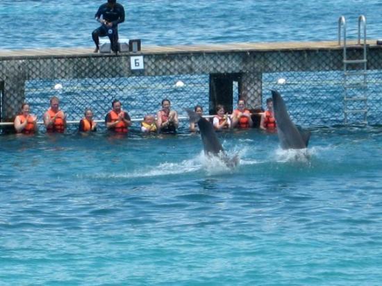 อิสลามูเคเรส, เม็กซิโก: The dolphin encounter, at Isla Mujeres, Mexico (Jun 18 08).