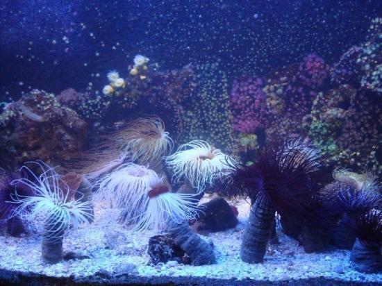 Grand Aquarium Photo