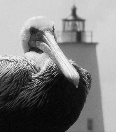 Ocracoke ภาพถ่าย