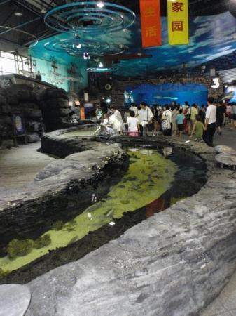 Beijing Aquarium (Beijing Haiyangguan): Kalojen uintikäytävä