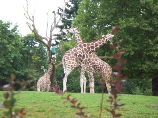 Woodland Park Zoo, Seattle, WA USA
