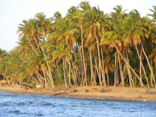 Yabucoa, เปอร์โตริโก: Palms at the Caribe Playa