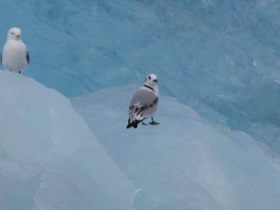 Spitsbergen ภาพถ่าย