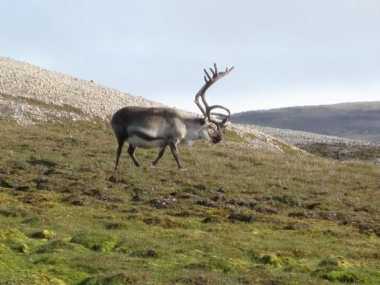 Spitsbergen, นอร์เวย์: Rudolf