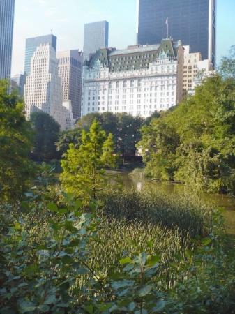 เซ็นทรัลปาร์ค: a view from Central Park....