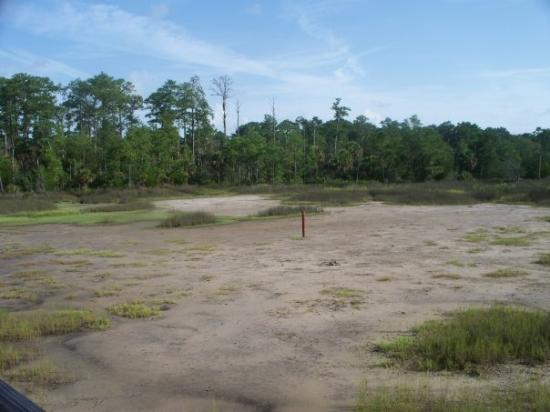 Skidaway Island State Park: The parks other nature trail - when the tide is in this is full of water.