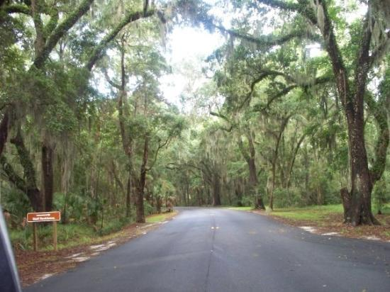 The road that exits Skidaway Island State Park - where we camped...so pretty!