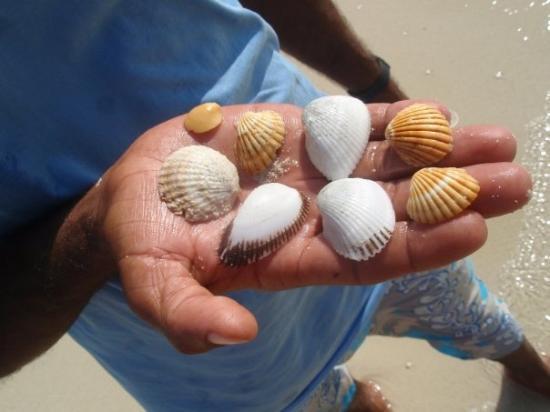 ฮูร์กาดา, อียิปต์: korale