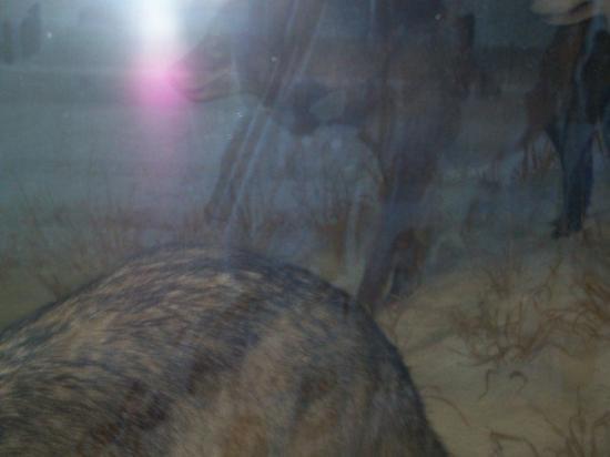 โคโลราโดสปริงส์ ภาพถ่าย