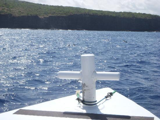 Aston Mahana at Kaanapali: Dolphins swimming with us on our boat excursion!