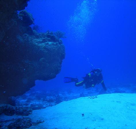 Occidental Cozumel: Diving on one of the reefs