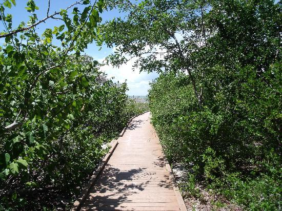 Delnor-Wiggins Pass State Park: Boardwalk in the Park