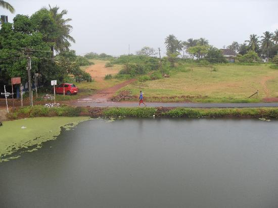 Casa Candolim: The pond which you can see from the balcony