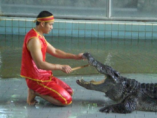 โรงแรมแอลเค เมโทรโปล: Go to the Crocodile Farm..make it snappy!