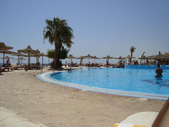 Blue Reef Red Sea Resort: La piscina!!!